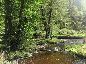 la chouffe wandeling natuur bos
