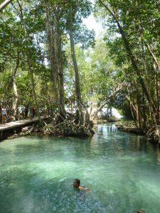 mangrove celestun mexico rondreis rondreizen yucatan vrouwen alleen