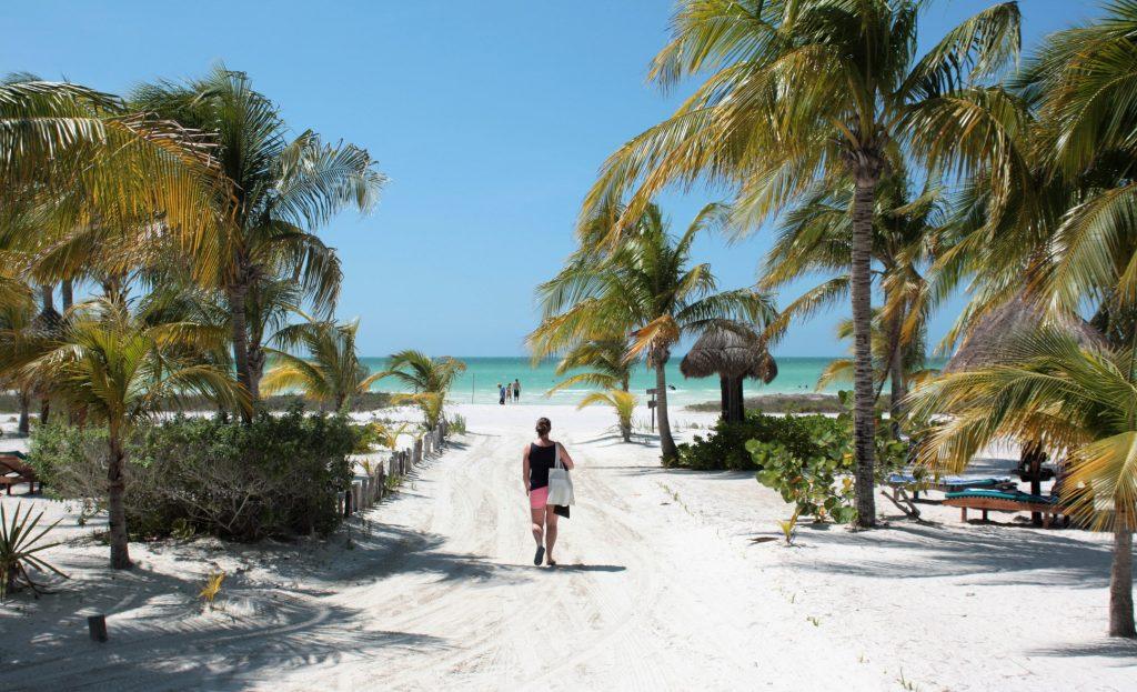 isla holbox blog palmboom jaaroverzicht blog