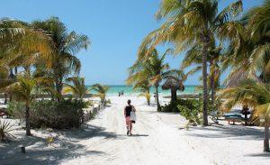 isla holbox svrine reisblog palmboom influencer