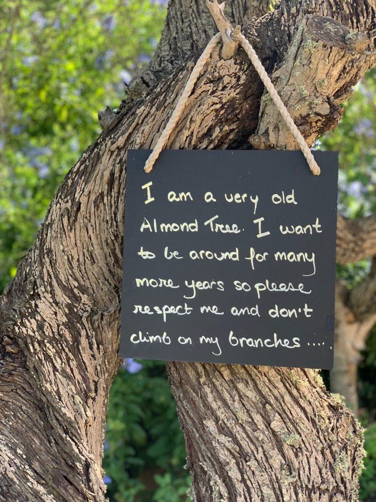 Prashanti retreats ibiza almond tree
