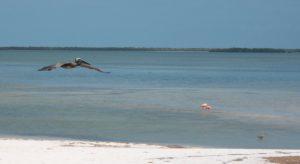 isla Holbox yucatan mexico isla pajaros flamingos blog albatros
