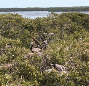 Isla pagaros isla holbox yucatan mexico albatros tour tres islas