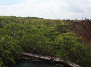 isla Holbox cenote yalahau groen