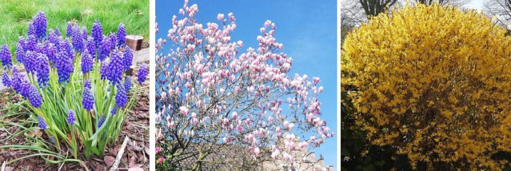 blauwe boontjes lentebloemen blog