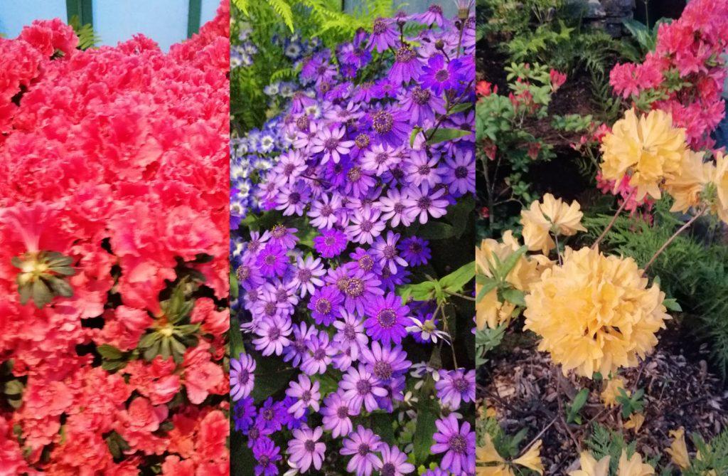 koninklijke serres laken brussel blog svrine bloemen