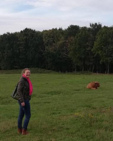 knokke zwinbosjes galloway runderen grote harige bruine koe