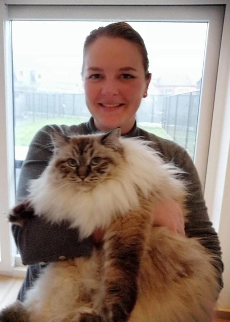 ragdoll cat katten knuffelen adopt don't shop harige kat prachtige kat knuffelen met dieren
