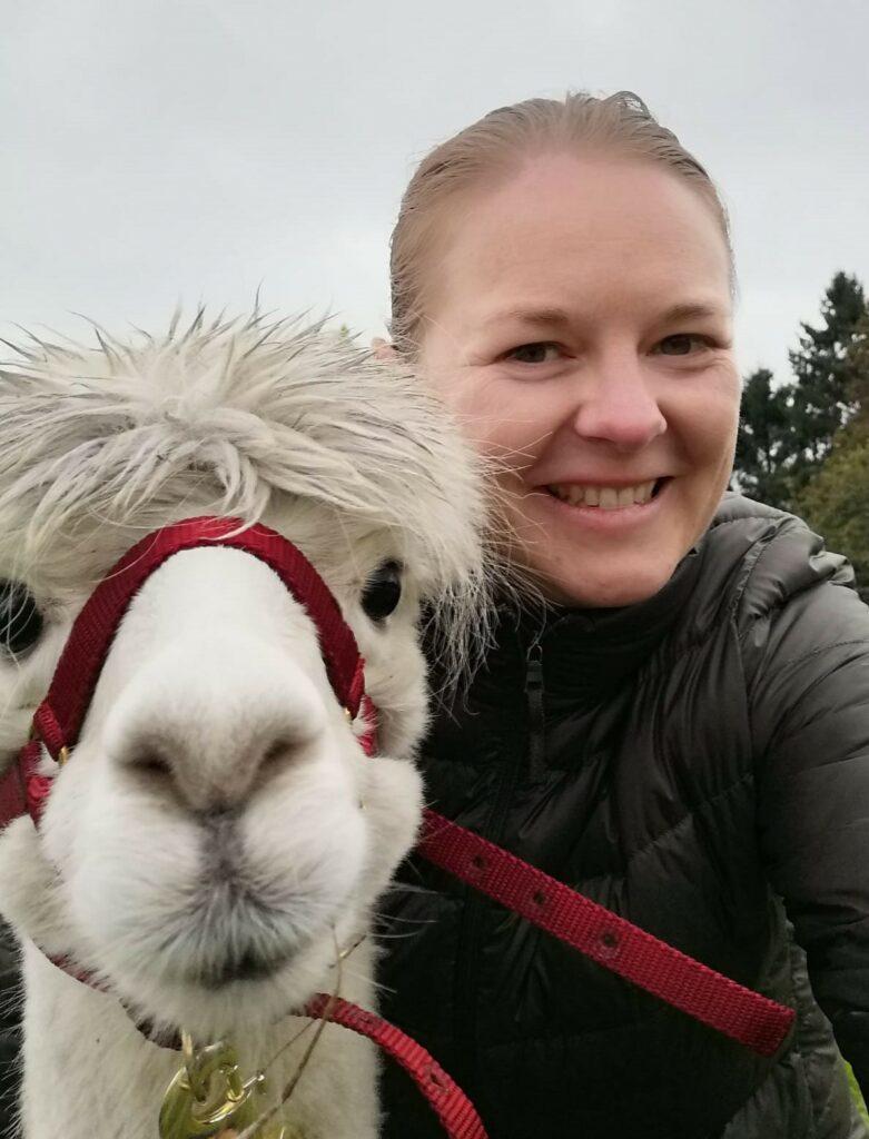 alpaca alpacaworld koewacht nederland alpacawandeling