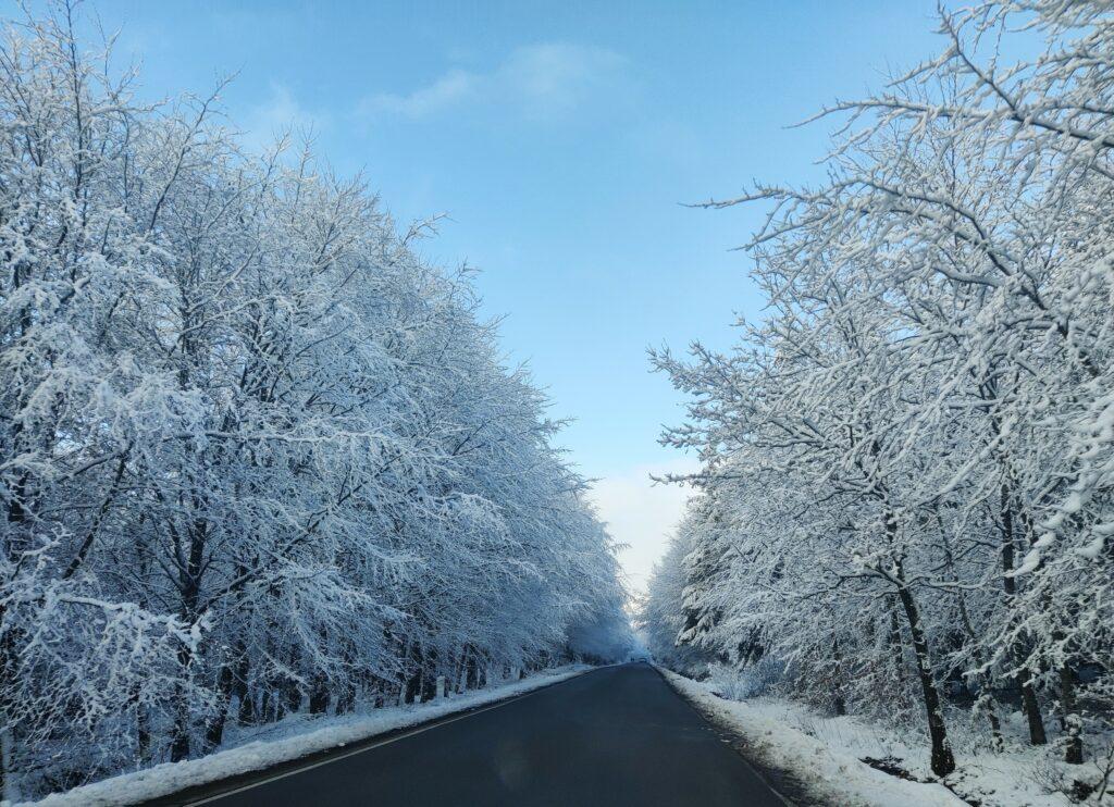 bomen met sneeuw sneeuw op bomen landschap hoge venen